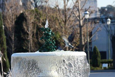 2008.12.28 横須賀ヴェルニー公園 噴水に鳩