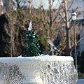 写真: 2008.12.28 横須賀ヴェルニー公園 噴水に鳩