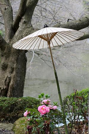2009.03.21 鶴岡八幡宮 神苑 牡丹庭園