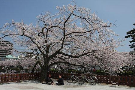 2009.04.07 小田原城 花見