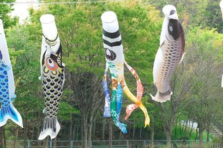 2014.04.14 和泉川 鯉幟