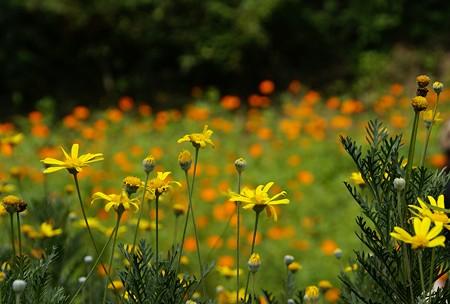 Yellowと・・Orangeの花たち・・