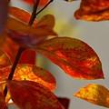 お庭で・・小さな秋~♪
