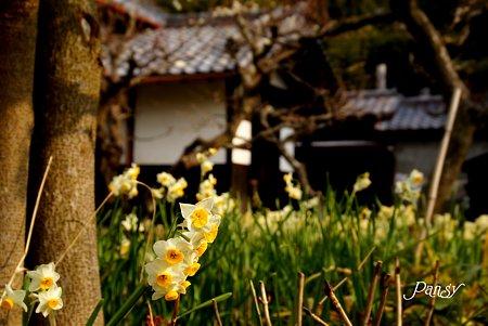 春まだ浅き北鎌倉・・