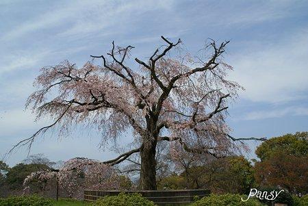 Symbol Tree・・円山公園にて・・
