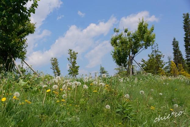 花菜ガーデン-036
