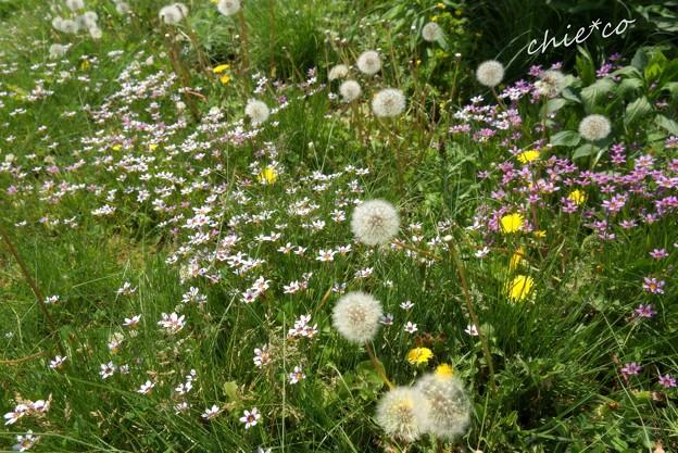 花菜ガーデン-027