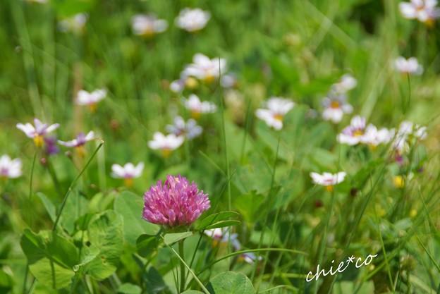 花菜ガーデン-033