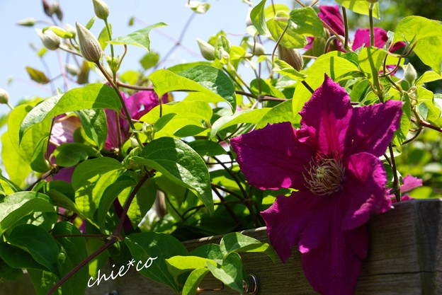 花菜ガーデン-201