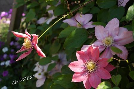 花菜ガーデン-202