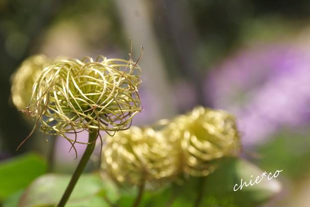 花菜ガーデン-218