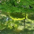 水彩画のような緑・・