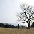 写真: 大きな樹と・・   吾妻山にて・・