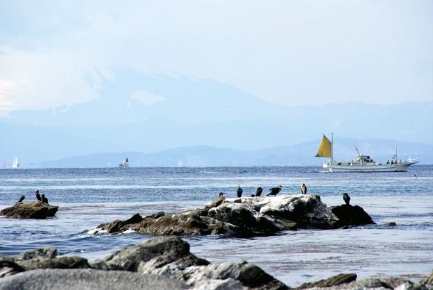 雲に隠れた富士と・・水鳥たちの磯 2