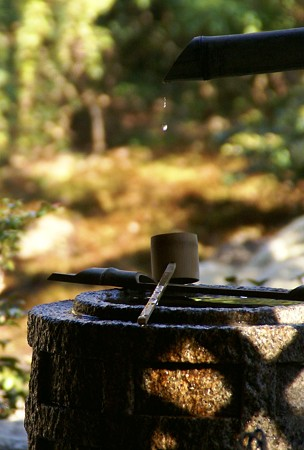 手水鉢に滴り・・・