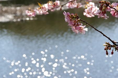 桜咲く・・水辺~♪