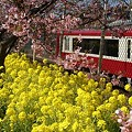 写真: 京浜急行と・・