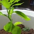 Photos: 中はこんな感じ。植えてる植...