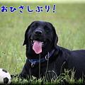 Photos: ひさしぶり