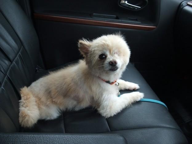 Photos: 柚子と最後のドライブ