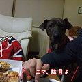 Photos: 駄目よ