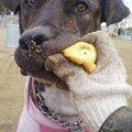 Photos: ボール食べたらアカン!