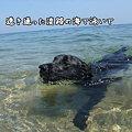 Photos: 淡路の海で
