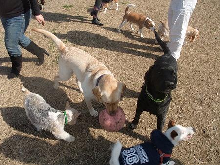 海ふれ~人も犬もいっぱい