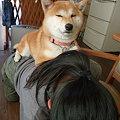 Photos: ゆめちゃん