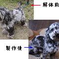 Photos: 同じ犬とは思われへん