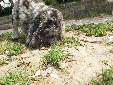 必死で草の根っこ食ってた・・・