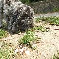 Photos: 必死で草の根っこ食ってた・・・
