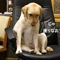 Photos: 座りなおし