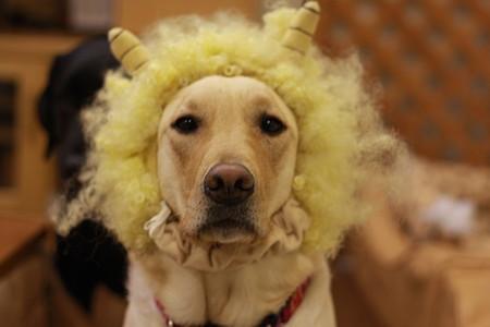 ライオン?!