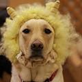 Photos: ライオン?!