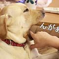 Photos: んがぁー