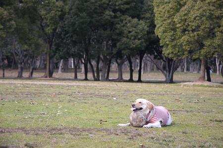 犬のいる風景