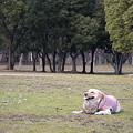 Photos: 犬のいる風景