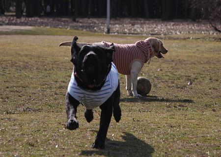 ボール追いかける