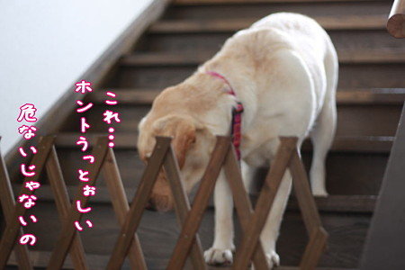 階段2(危ないって!)