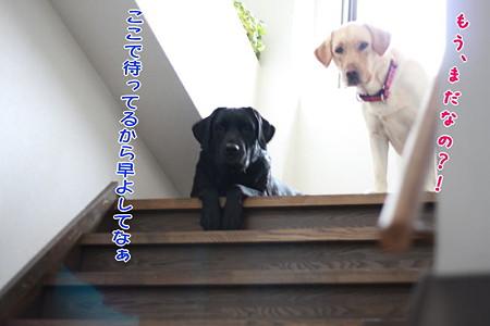 階段5(すかさずフセ体勢)