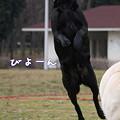 Photos: びよーん