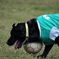 Photos: サッカー
