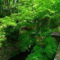 緑の美しさ