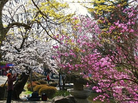 2009年4月12日 高島城など (49)