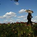 秋空のもと、川の土手を花散歩。(9/20)