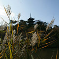 写真: 葦と三重の塔1123m