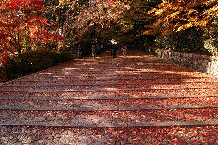 モミジの階段光明寺1128h