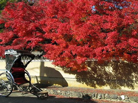 紅葉真っ盛り、出番待ちの人力車。