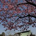 写真: 春一番、ぽかぽかの長谷寺!(2/14)